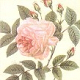 Cocktailservietten Rosa Rose